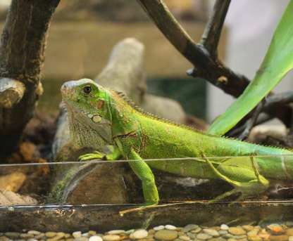 New Exhibition of Reptiles and Amphibians at Quito Airport